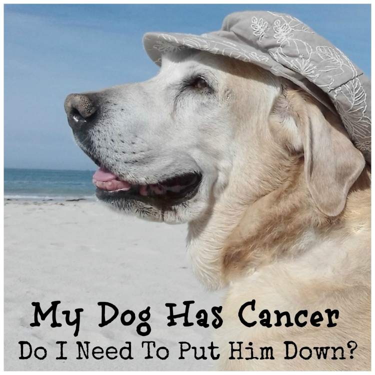 My dog has cancer do I need to put him down