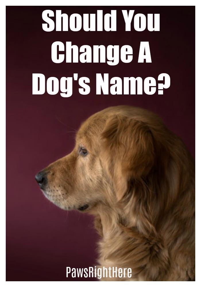 Should you change a dog's name