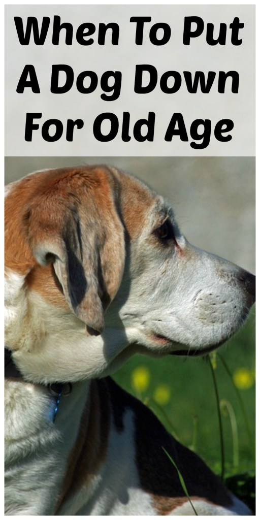 When to put a dog down because of old age