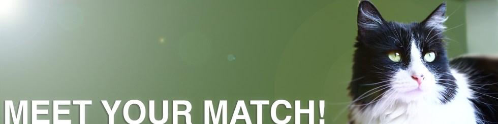 Cat meet your match