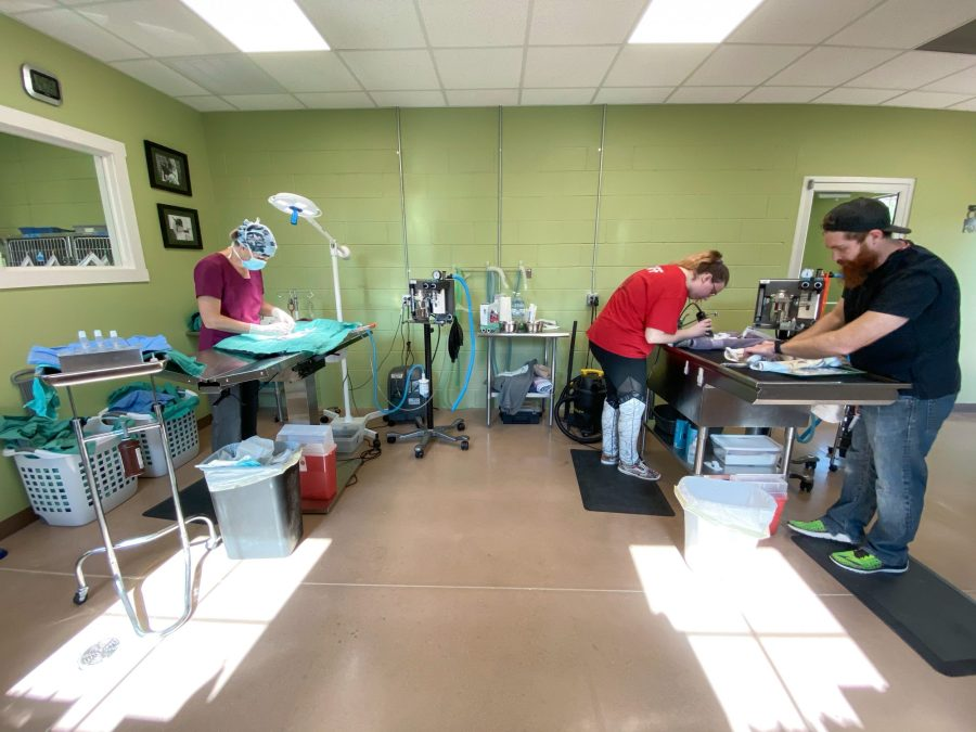 While the doctor works, Andrew, our lead vet tech, and his vet tech assistant prep the next animals for surgery.