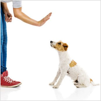 Teach Your Dog to Stay On Command