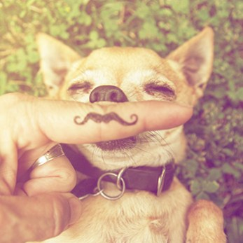 Dog with Finger Mustache
