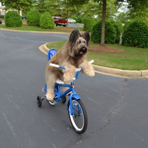Norman the Scooter Dog