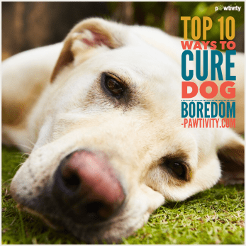 Top 10 Ways To Cure Dog Boredom