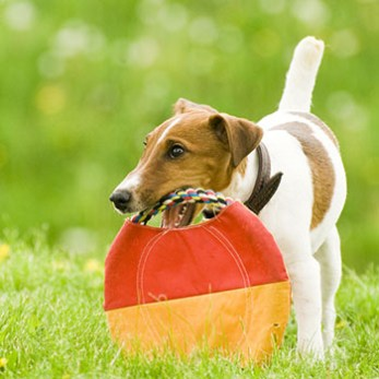 Roll a Frisbee On The Ground To Your Dog