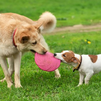 Play Frisbee With Your Dog