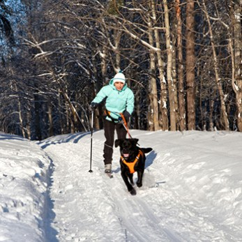 Go Skijoring with Your Dog