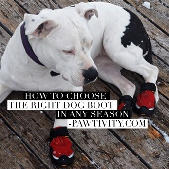 The Right Dog Boot For Your Dog In Any Season - Pawtivity.com