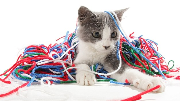 Taking Care of Kittens:  Playtime & Safety