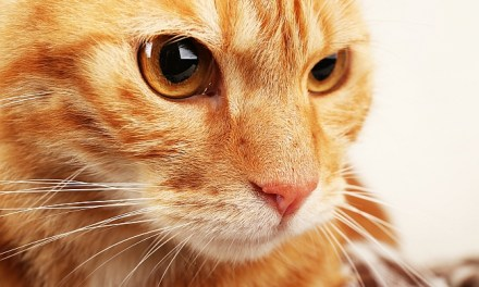 Cat Whiskers & Why Do Cats Have Them?