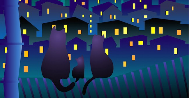 Cats In Night Town