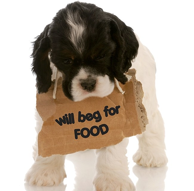 Stop the Begging!