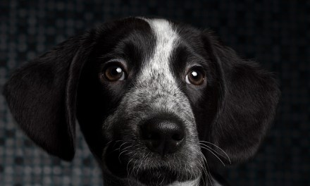 Dog Whiskers & Their Purpose