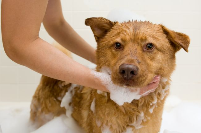 Pet Dandruff: Treatments and Remedies
