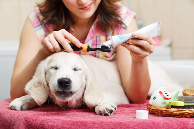 girl brushing dog's teeth