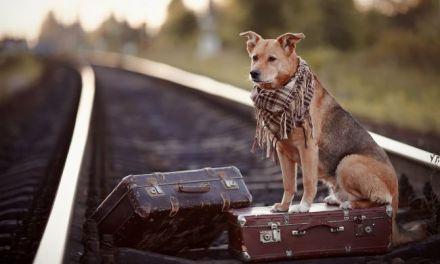 Why Do Dogs Run Away?