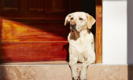Top Ten Mistakes Pet Owners Make
