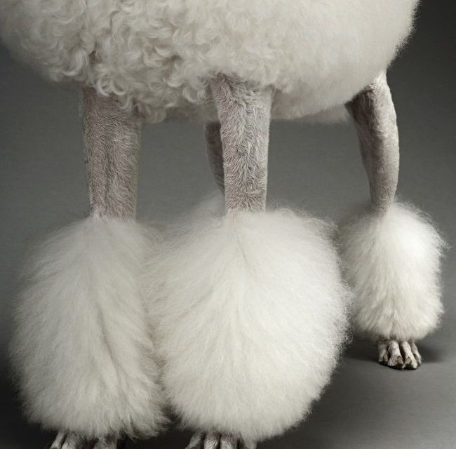 Poodle Coats:  All Intents and Purposes