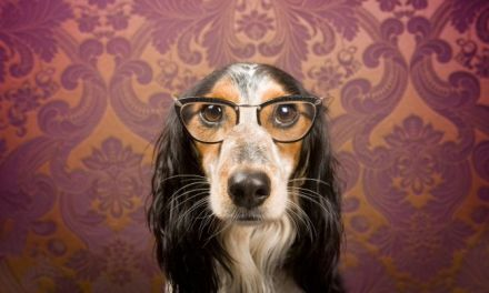 The Brightest and Best:  Top Ten Smartest Dog Breeds