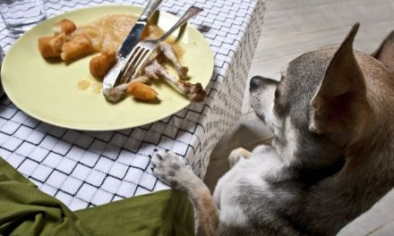 Using Leftovers For Your Dog's Diet