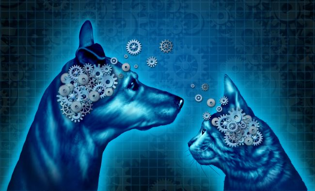 Negative Behavior in Domestic Pets