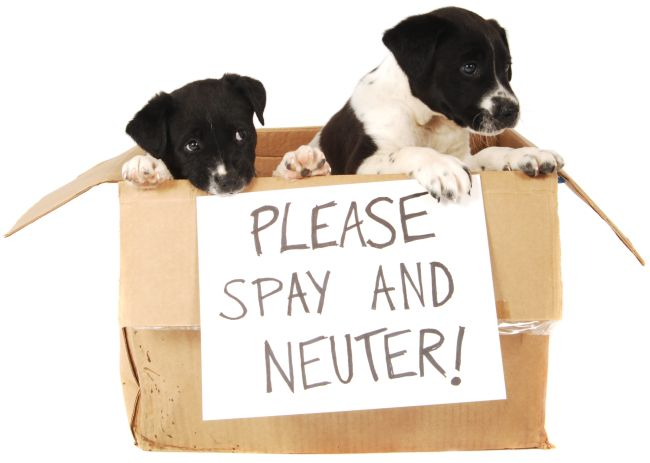 Top 10 Reasons to Spay or Neuter Your Pet