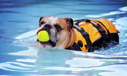 Dog Breeds That Cannot Swim