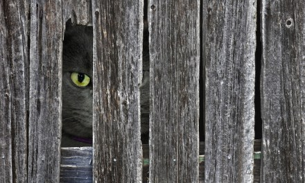 How to Keep Neighborhood Cats Out of Your Yard