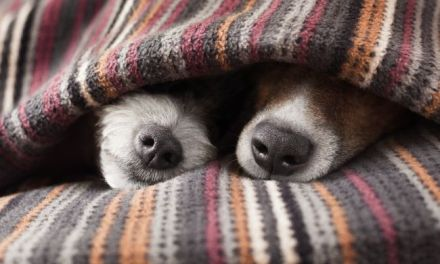 Why Dogs Like to Burrow in Blankets