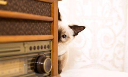 5 Ways to Bond With a Shy Cat