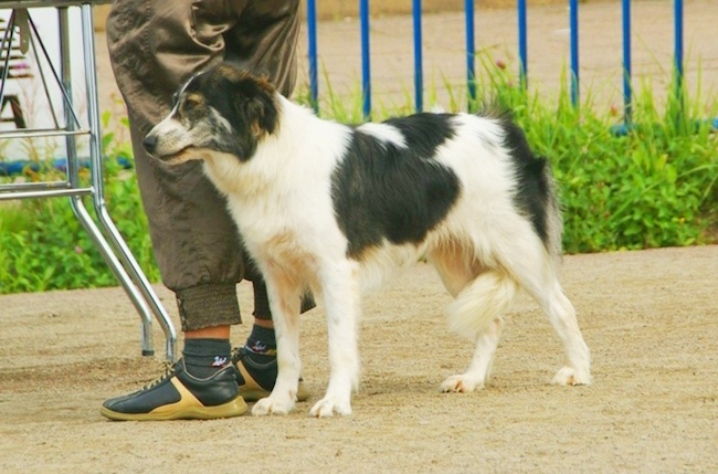 Rarest Dog Breeds in the World