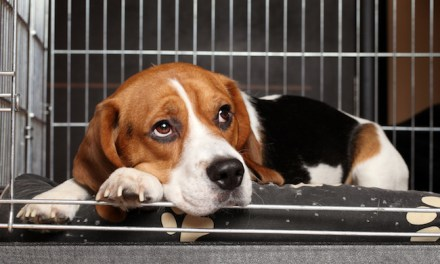 Why People Hesitate to Adopt or Foster Pets