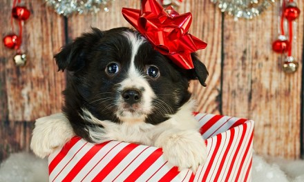 Reasons Why Not To Give A Puppy As A Christmas Gift
