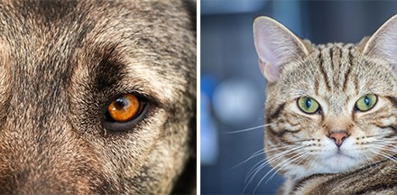 Animal Pupil Shapes