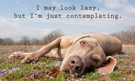 What To Do When You Have a Lazy Dog