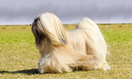 Types of Canine Coat Textures