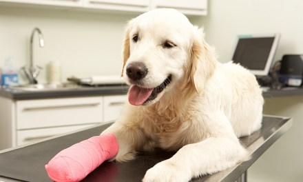 6 Reasons Why You Should Consider Pet Insurance