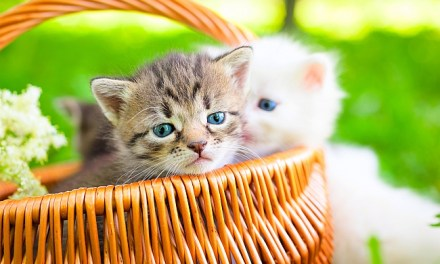 Check-List For New Cat Owners