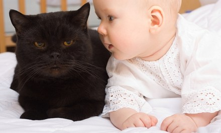 Cats and Newborn Babies
