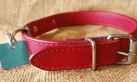 Best Types of Dog Collars