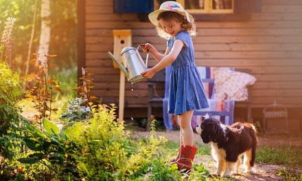 Growing a Healthy Garden for Your Pet