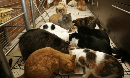 "How To Love Cats and Not Be Deemed a ""Cat Lady"""