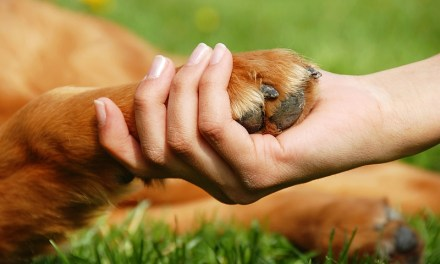 Pampered Paws: Caring For Pet Feet
