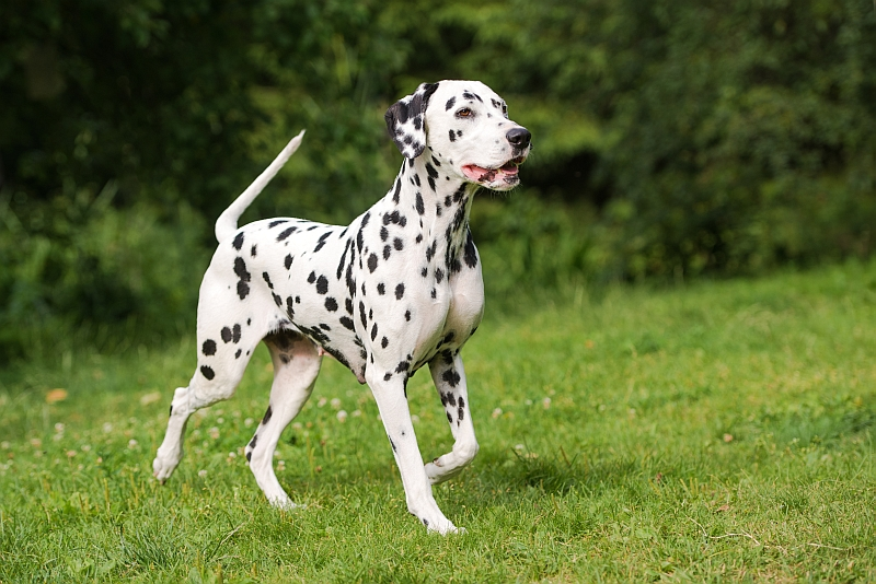 Most Difficult to Train Dog Breeds