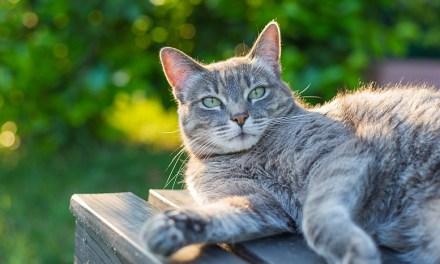 Indoor VS Outdoor Living for Cats