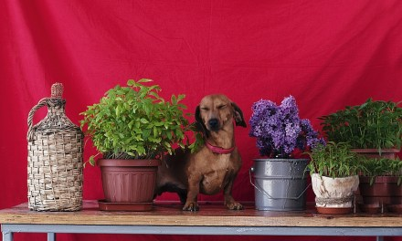 "The Easiest ""Pet Plants"" To Keep"