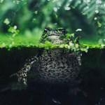 Non-Fish Pets For Aquariums