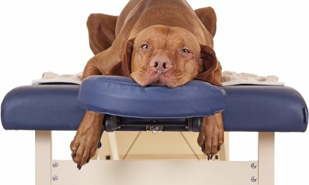 Tellington TTouch Therapy for Pets