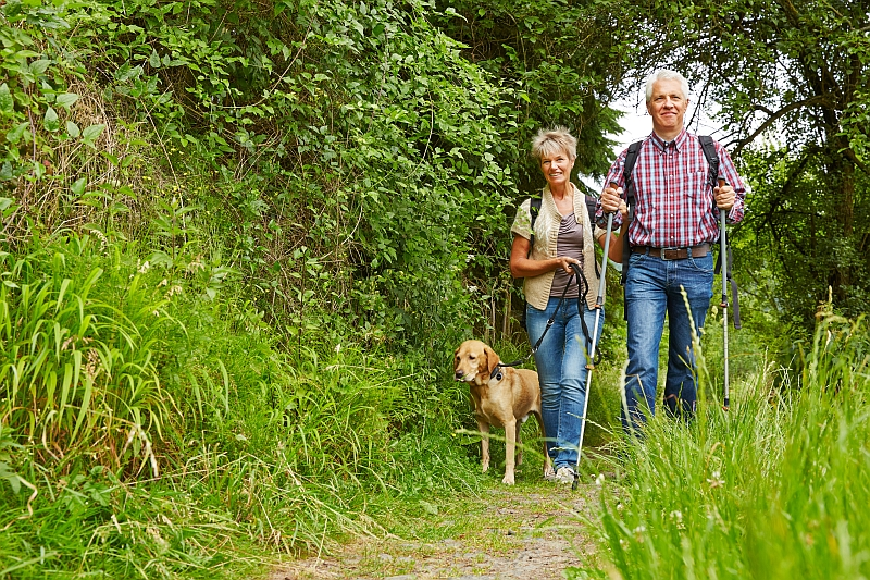 Protection Tips For Walking Your Dog